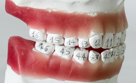 Фото: нумерация зубов в стоматологии