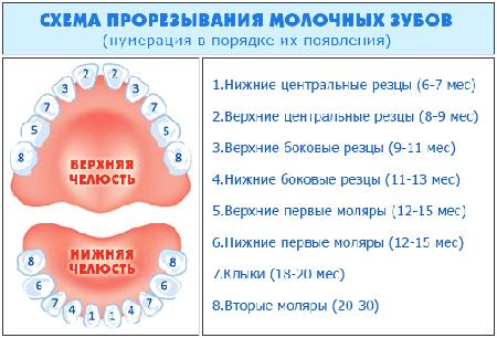 схема прорезывания зубов у младенцев