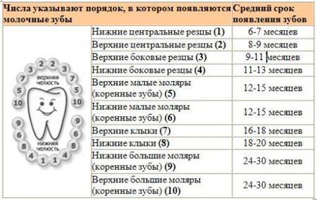 Фото: график появления молочных зубов